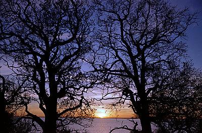 Sonnenuntergang auf der Insel Vilm - p1016m792498 von Jochen Knobloch