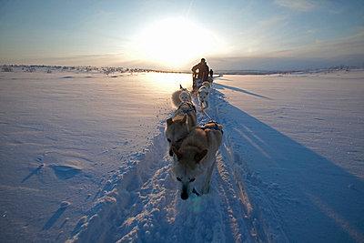 Norway, Finnmark Region. Dog sledding in the Arctic Circle - p6521451 by Mark Hannaford