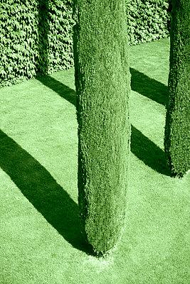 Italienischer Garten mit Zypressen - p1149m1573480 von Yvonne Röder
