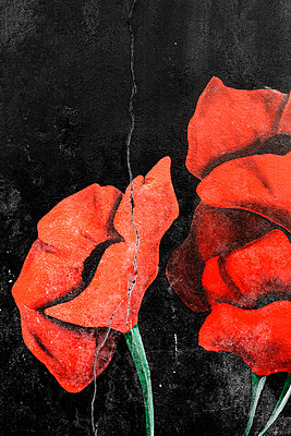 poppies painted on cracked wall - p1280m2108879 by Dave Wall
