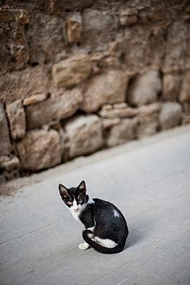 Stray cat - p971m947645 by Reilika Landen