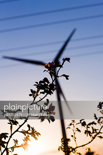 Wild roses and a wind turbine in the background Sweden