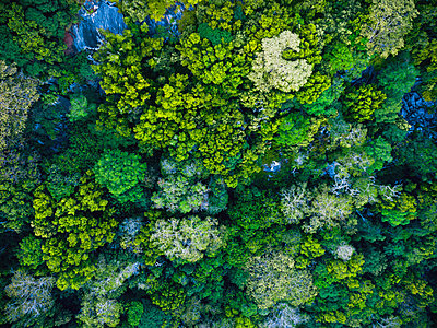 Seychelles, La Digue, Aerial view of rain forest - p300m2059438 by Michael Malorny