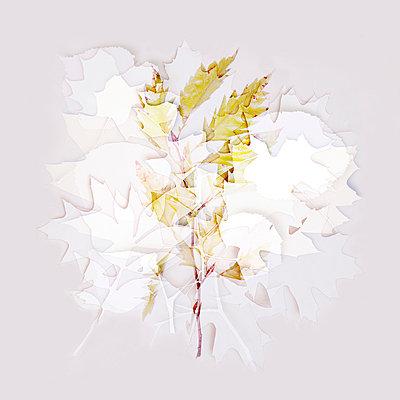 Blättercollage - p4150631 von Tanja Luther
