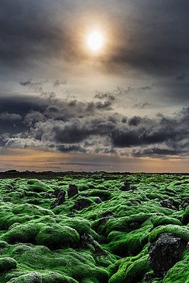 Eldraun Lava Fields - p1280m1562074 by Dave Wall