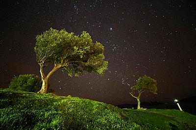 Spain, Cadaques, olive trees under starry sky - p300m2083228 von David Santiago Garcia