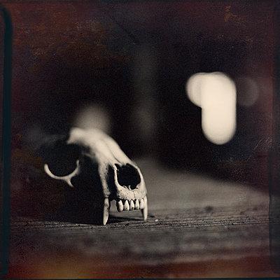 Animal Skull - p1154m1574294 by Tom Hogan