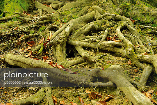 Forest soil - p3830502 by visual2020vision