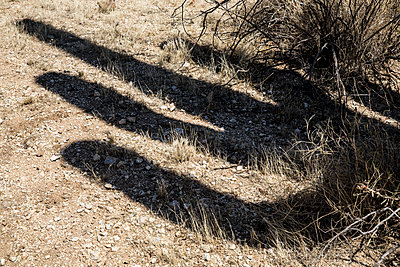 Shadow of a cactus - p1291m1515346 by Marcus Bastel