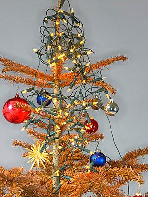 Alter Weihnachtsbaum - p509m763079 von Reiner Ohms