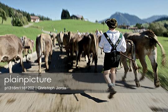 Mann in Tracht beim Viehscheid, Allgäu, Bayern, Deutschland - p1316m1161202 von Christoph Jorda