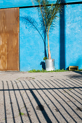 Palm tree and blue wall - p1047m940445 by Sally Mundy