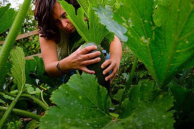 Adult woman between courgette plants in allotment garden - p1579m2195686 by Alexander Ziegler