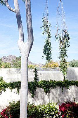 Phoenix - p1514m2054028 von geraldinehaas