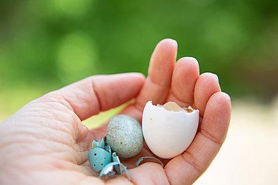 Different  bird's eggs - p454m2200629 by Lubitz + Dorner