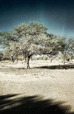 Bäume in der Wüste - p1248m1138268 von miguel sobreira