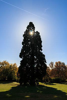 Arboretum - p417m1190202 von Pat Meise