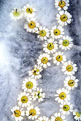 p451m2203883 by Anja Weber-Decker