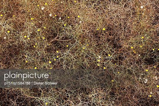 Blumen - p751m1584788 von Dieter Schwer