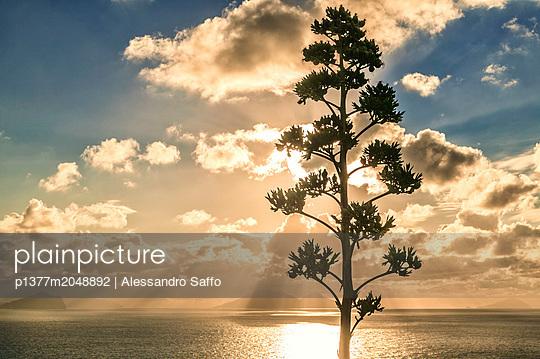 p1377m2048892 von Alessandro Saffo