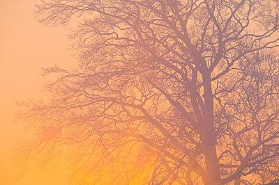 Orangefarbenes Licht - p1057m852996 von Stephen Shepherd