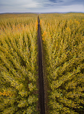 High angle view of road amidst autumn trees against sky - p1166m1523224 by Cavan Images