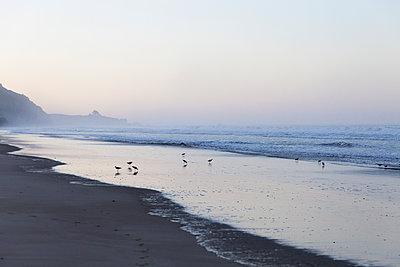 Seagulls at Stinson Beach - p756m2054501 by Bénédicte Lassalle