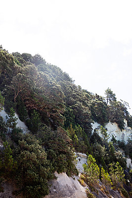 Wooded steep coast, Cathedral Cove, New Zealand - p756m2157844 by Bénédicte Lassalle
