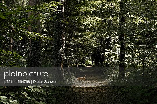 Waldweg - p751m1584769 von Dieter Schwer