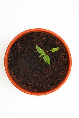 Seedling - p5040078 by JulianWard