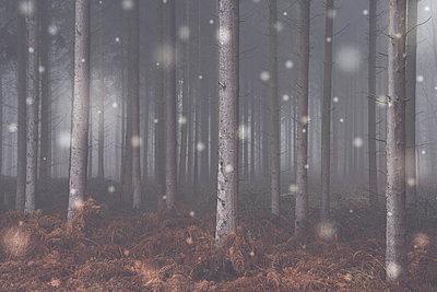 Winterwald - p401m1198584 von Frank Baquet