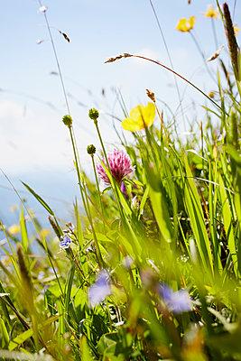 wilde Blumenwiese - p464m1087098 von Elektrons 08