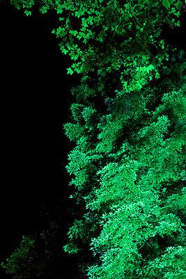 Angestrahlte Baumkronen I - p606m822716 von Iris Friedrich