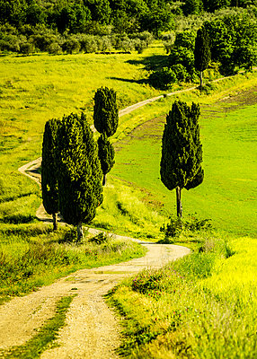 The road to Terrapille Villa near Pienza - p968m987190 by roberto pastrovicchio