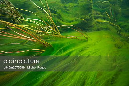 p840m2075889 von Michel Roggo