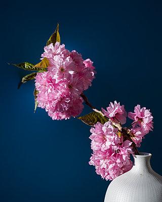 Cherry blossom branch - p801m2257704 by Robert Pola