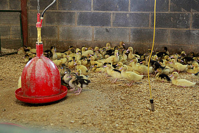 Tierhaltung - p1058m817151 von Fanny Legros