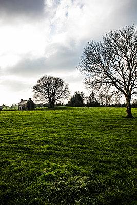 Abandoned Cottage in Field - p1082m2038624 by Daniel Allan