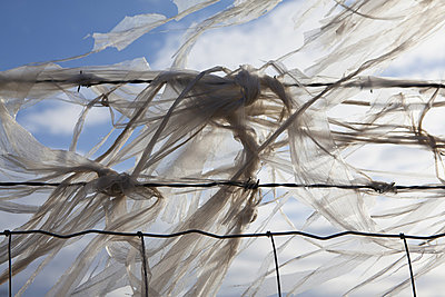 Plastic bags caught on a barbed wire fence - p1100m876517f by Paul Edmondson