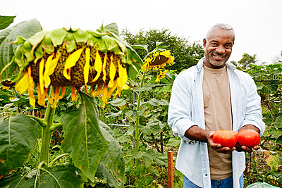 Black man holding tomatoes in community garden - p555m1478643 by Peathegee Inc