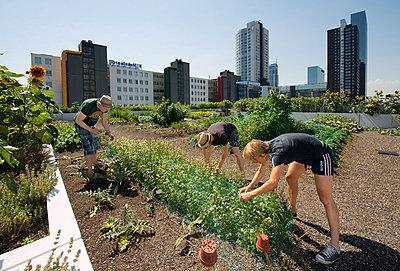 Urban Gardening - p896m919373 von David Rozing