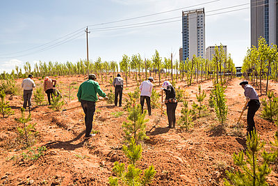 Team planting trees at the edge of the city - p834m1138373 by Jakob Börner