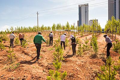 Bäume pflanzen im Team am Stadtrand - p834m1138373 von Jakob Börner