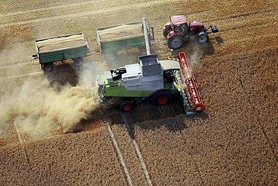 Getreideernte  - p1016m2000005 von Jochen Knobloch
