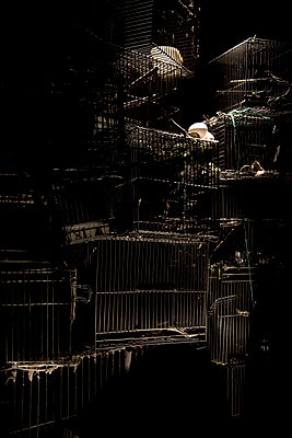 Empty cages - p6190114 by Samira Schulz
