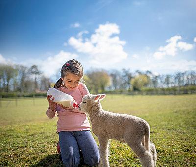 UK, North Yorkshire, Girl (6-7) feeding newborn lamb with bottle in organic farm - p924m2292510 by Monty Rakusen