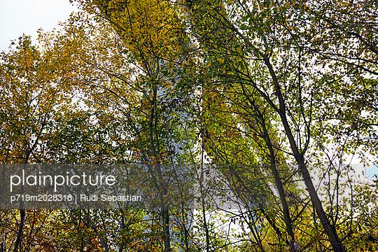 Herbstliche Bäume unter Btonbrücke - p719m2028318 von Rudi Sebastian