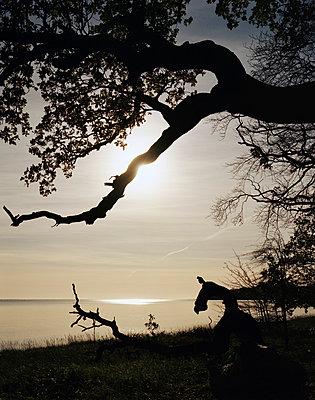Sonnenuntergang auf Vilm - p1016m792637 von Jochen Knobloch