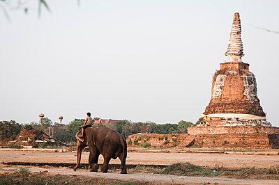 Elefantenreiten vor einem Tempel - p1273m1496187 von melanka
