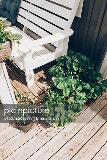 Strawberries growing - p1507m2099977 by Emma Grann